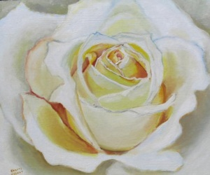 'A Winter's Rose'