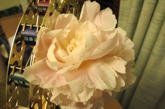 Julie Fast's Roses 002